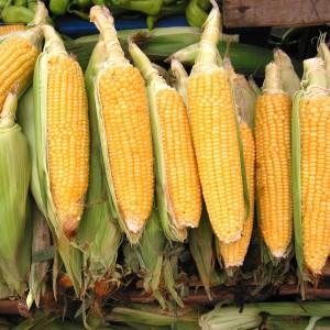 corn-1323603